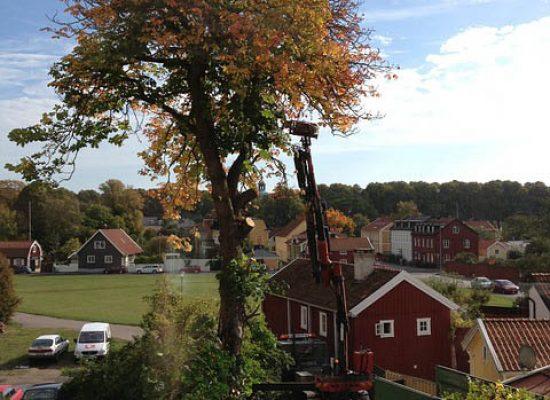 Beskärning Kalmar